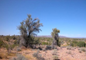 Wikieup,Arizona 86406,Land,1012